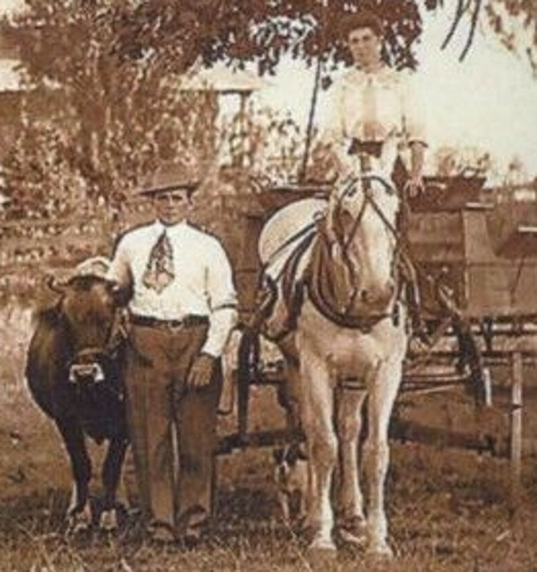 Cedar Hill Tx Man, Wife, Cow, Horse Wagon 1920