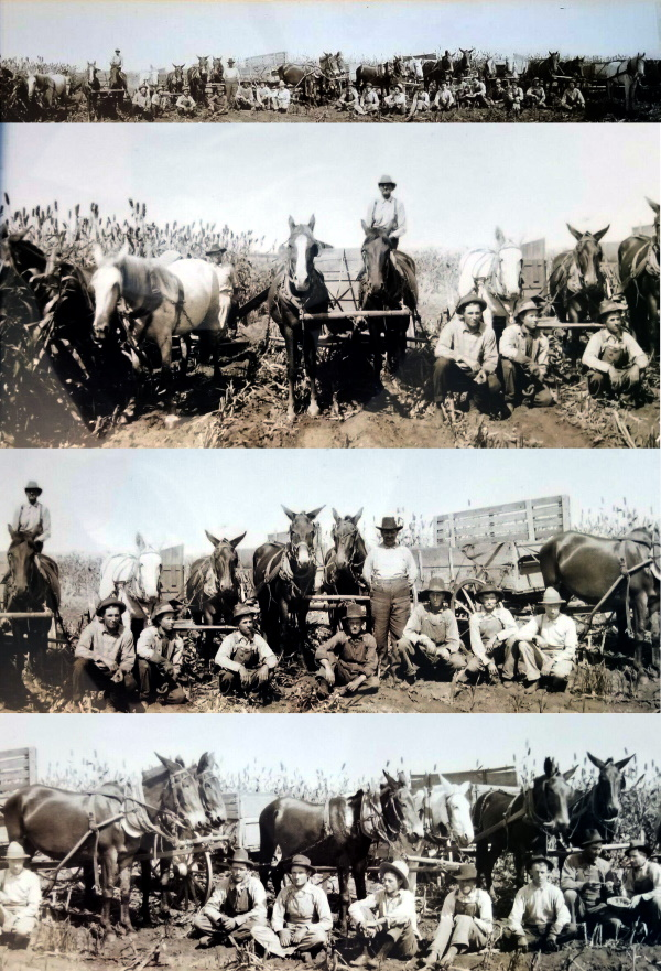 Childress Farmers Help Sick Neighbor with Harvest in 1914