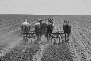 Horse-drawn plowing in Childress County Tx 1938