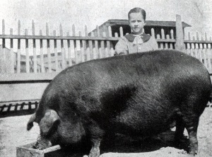 Jack Starr and His Prize Winning Pig in Midland Texas in 1918
