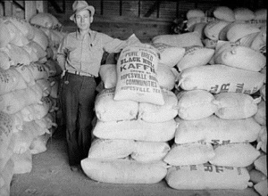 Kaffir seed grown by Ropesvelle Tx farmers in 1939