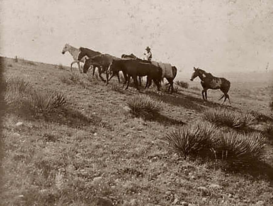 LS Ranch in Oldham County in 1907