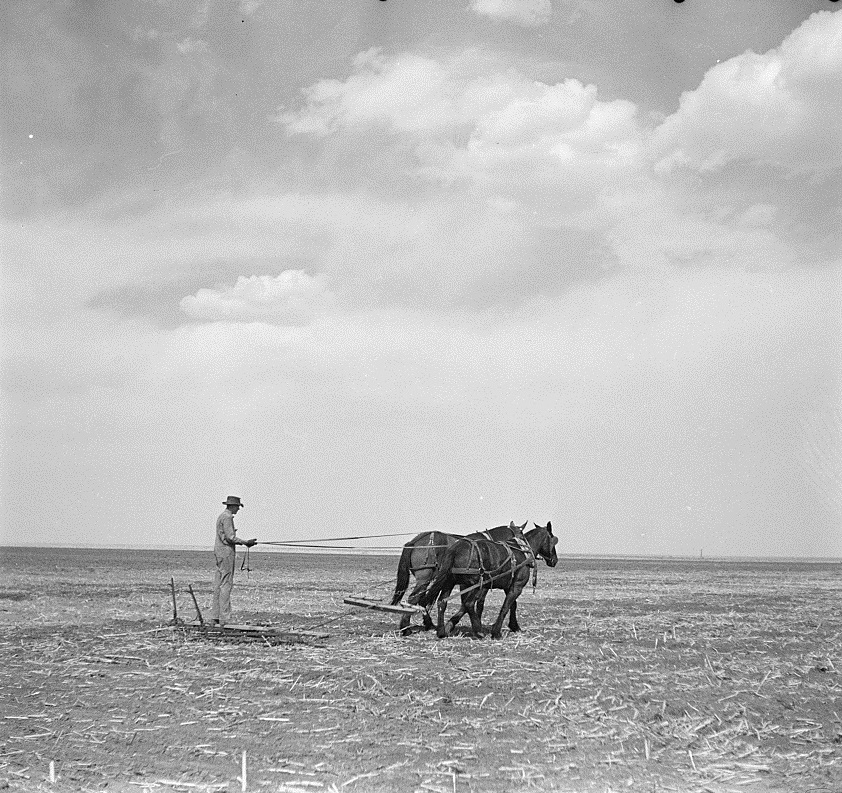Plowing a field in Bailey County Texas in 1936
