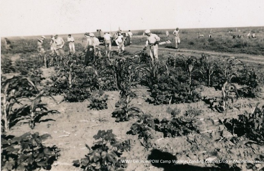 German POWs in Muleshoe Cotton Field