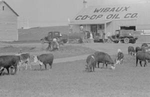 Wibaux County Picture from eBay